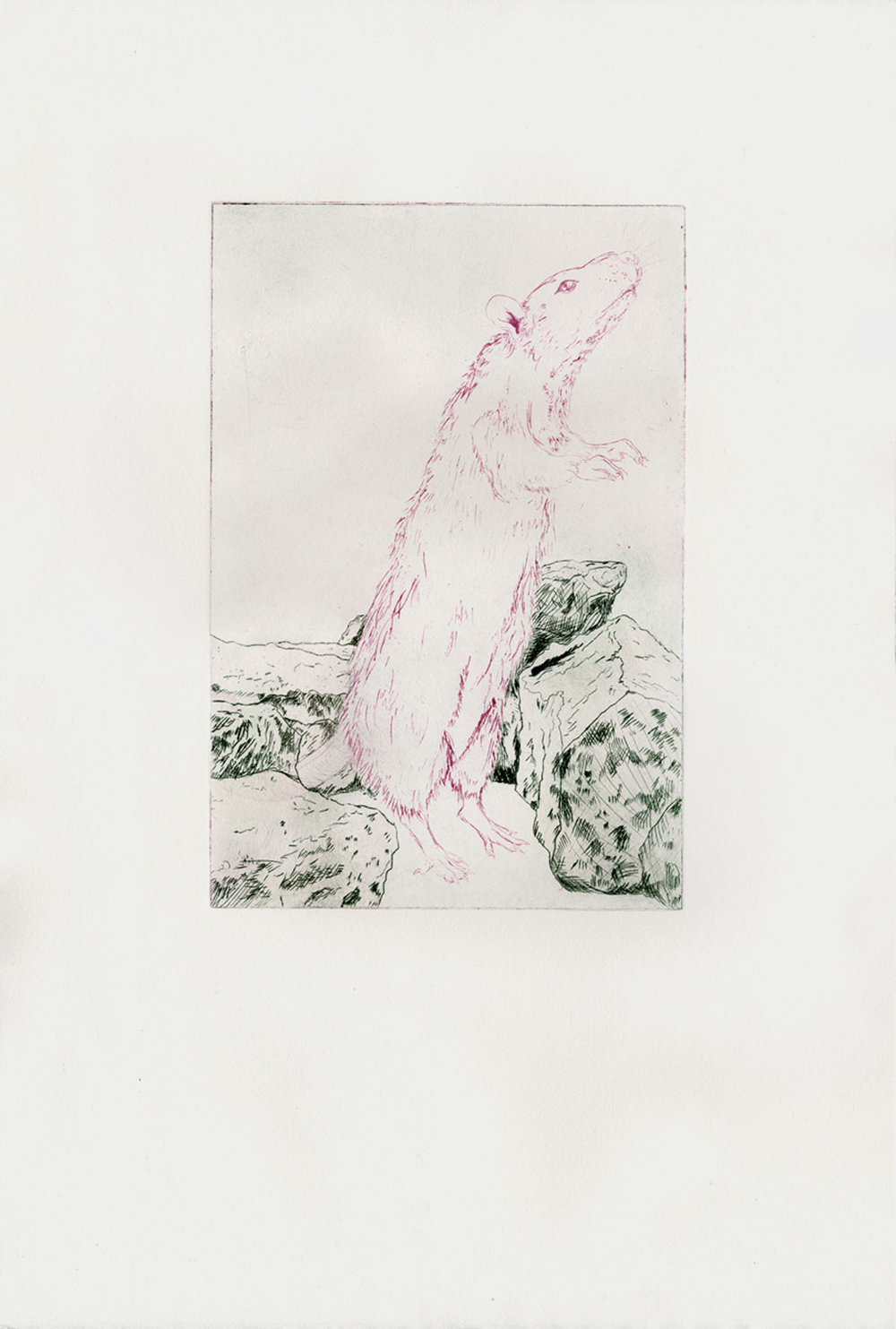 Ashley L. Schick A Scent of Fire and Mortality two color drypoint 15 x 22 inches ASC 001G.jpg
