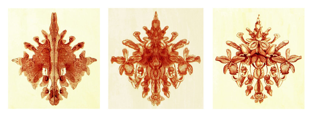 Robert Sherer Rorschach Triptych blood of virgins on paper 27 x 24 inches RSH 002G.jpg