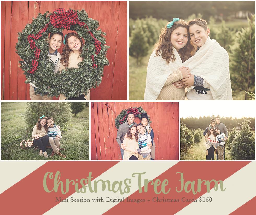 christmas tree farm mini session greensboro family photographer.jpg