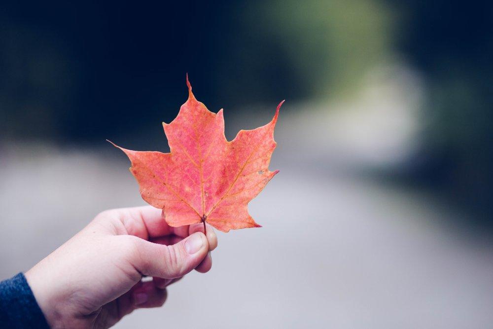 Leaf picture for website.jpg