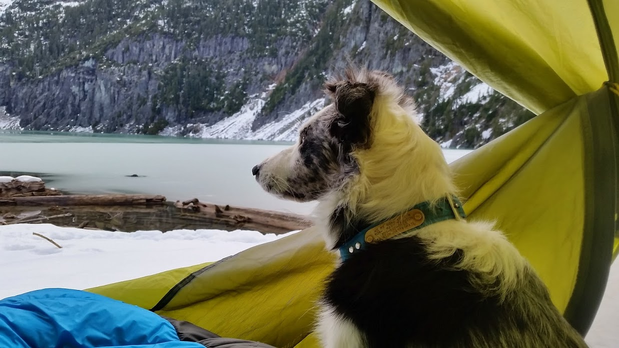 Dog at Blanca Lake