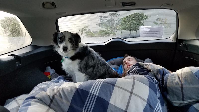 Llew sleeping in the car