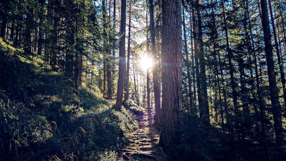 Hiking trail pines flexibility.jpg