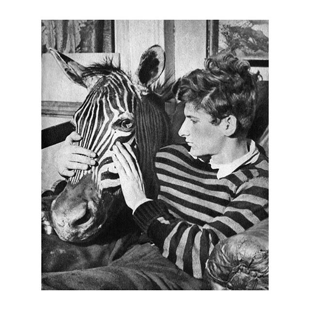 The Zebra & Lucian Freud #neverenoughstripes