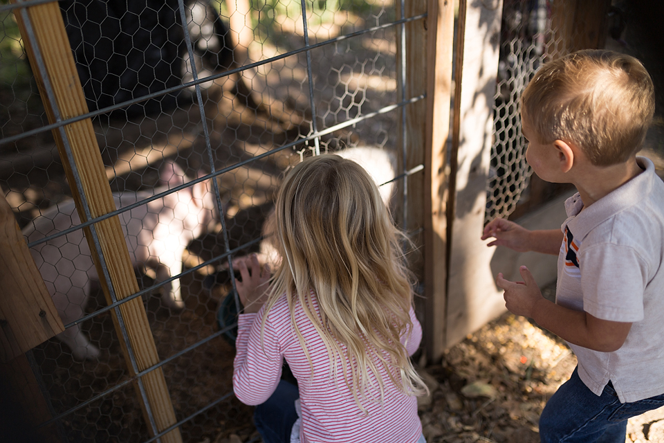 college station family photographer farm patch petting zoo
