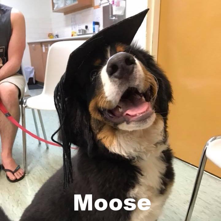 PPS - Moose.jpg