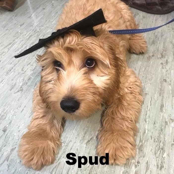 PPS - Spud.jpg