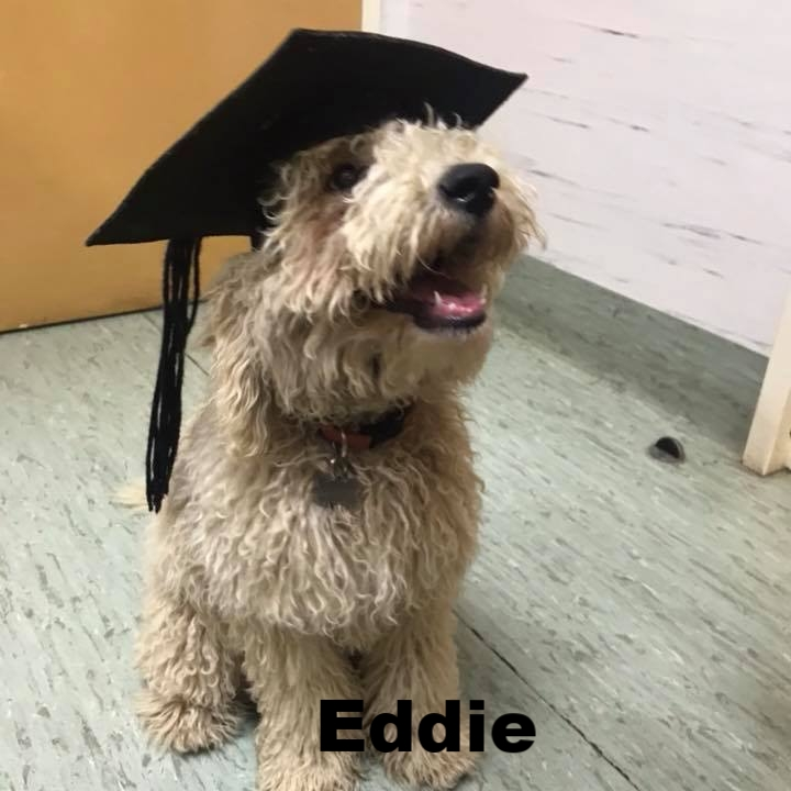 PPS - Eddie.jpg