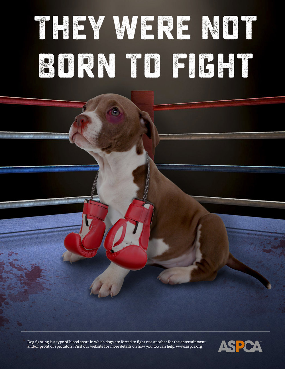 School Project ASPCA Poster against Dog Fighting