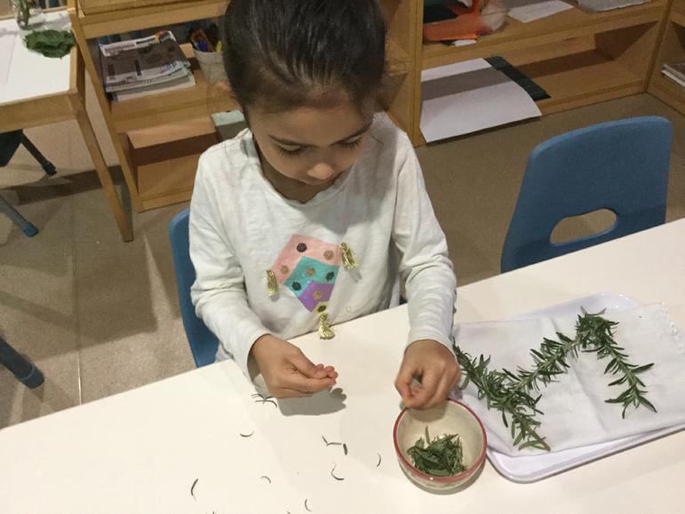 Sorting Herbs
