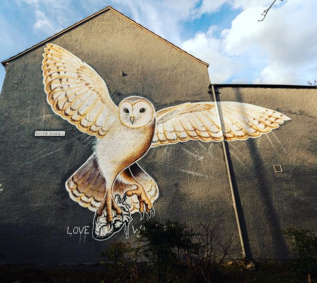 The Barn Owl of Highams Park by @jane_mutiny with support from @writersbenchltd & @giusitomaselloart as part of Paint Your London for @woodstreetwalls - photo courtesy of @hookedblog #streetartlondon #streetart #highamspark #giveartistsspace #urbanart #mural #lovewildlife