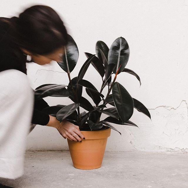 Jugando con plantas en @alblancatelier 📷 @iammartaguillen