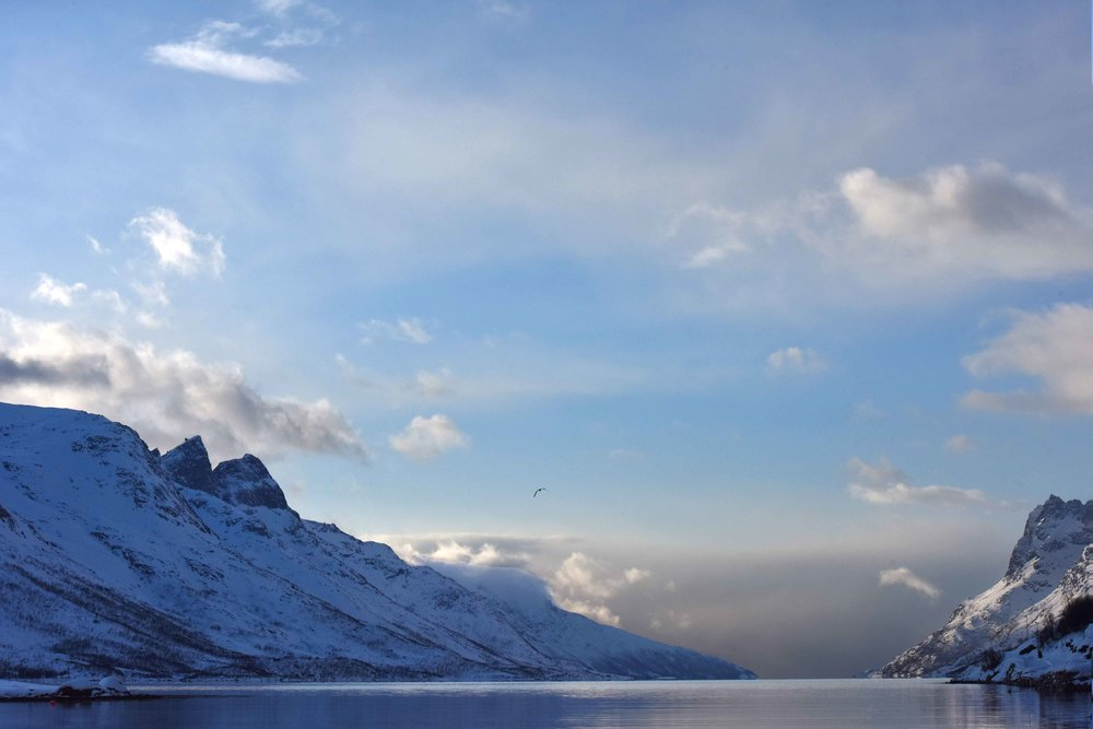 Norwegian fjords, near Tromso, Norway. Image©thingstodot.com