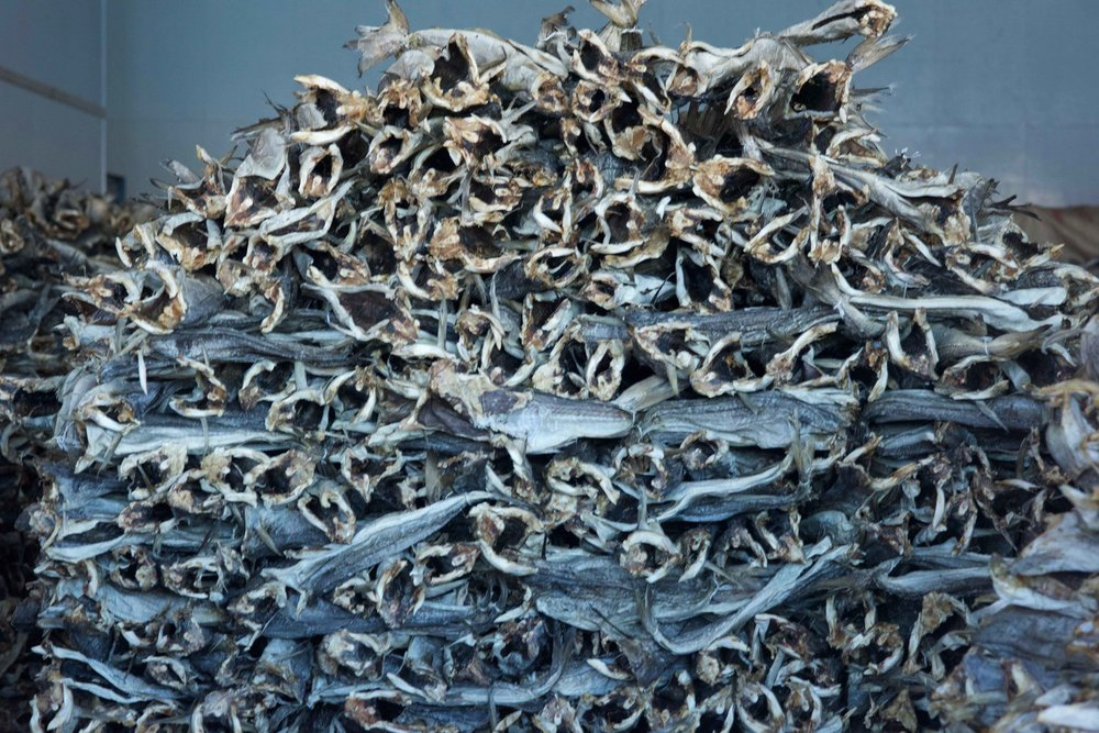 Dried fish, Havnnes, Uløya, Norway. Image©thingstodot.com