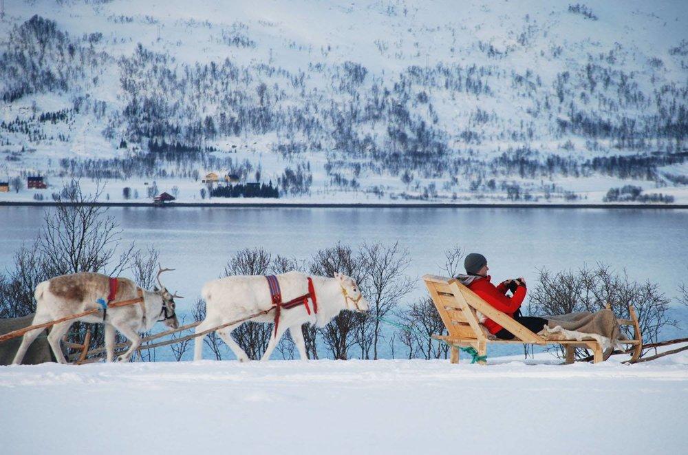 Reindeer Sledging,Tromso, Norway. Photo:Youssef Amaaou. Image©Youssef Amaaou
