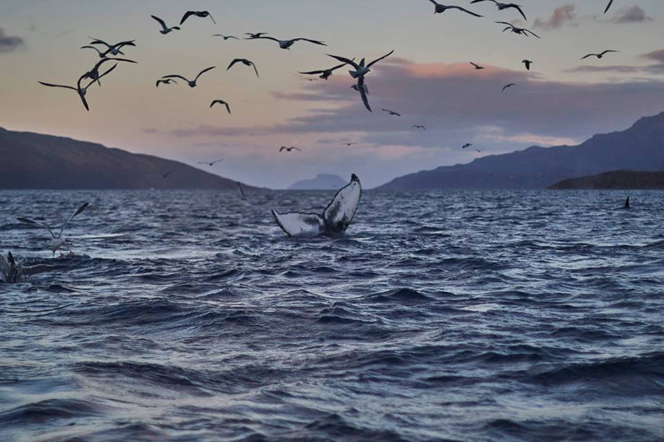 Whale Spotting,Tromso, Norway. Photo:Youssef Amaaou. Image©Youssef Amaaou