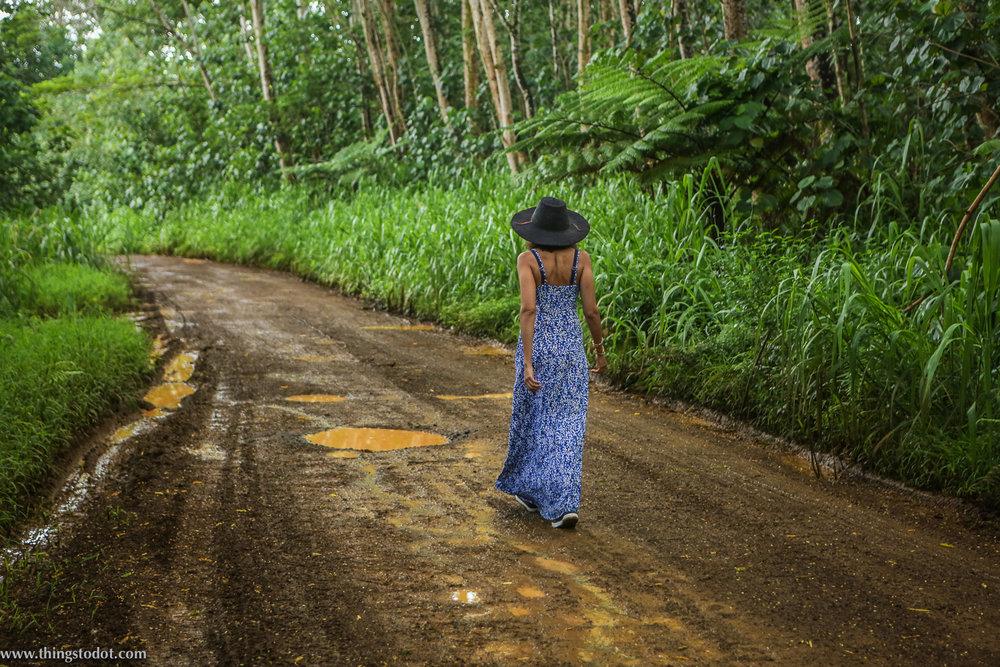 Loop Road, Keahua Forestry Arboretum,Kauai, Hawaii. Photo: Jonathan Moeller (www.jmoellerphoto.com).Image©www.thingstodot.com