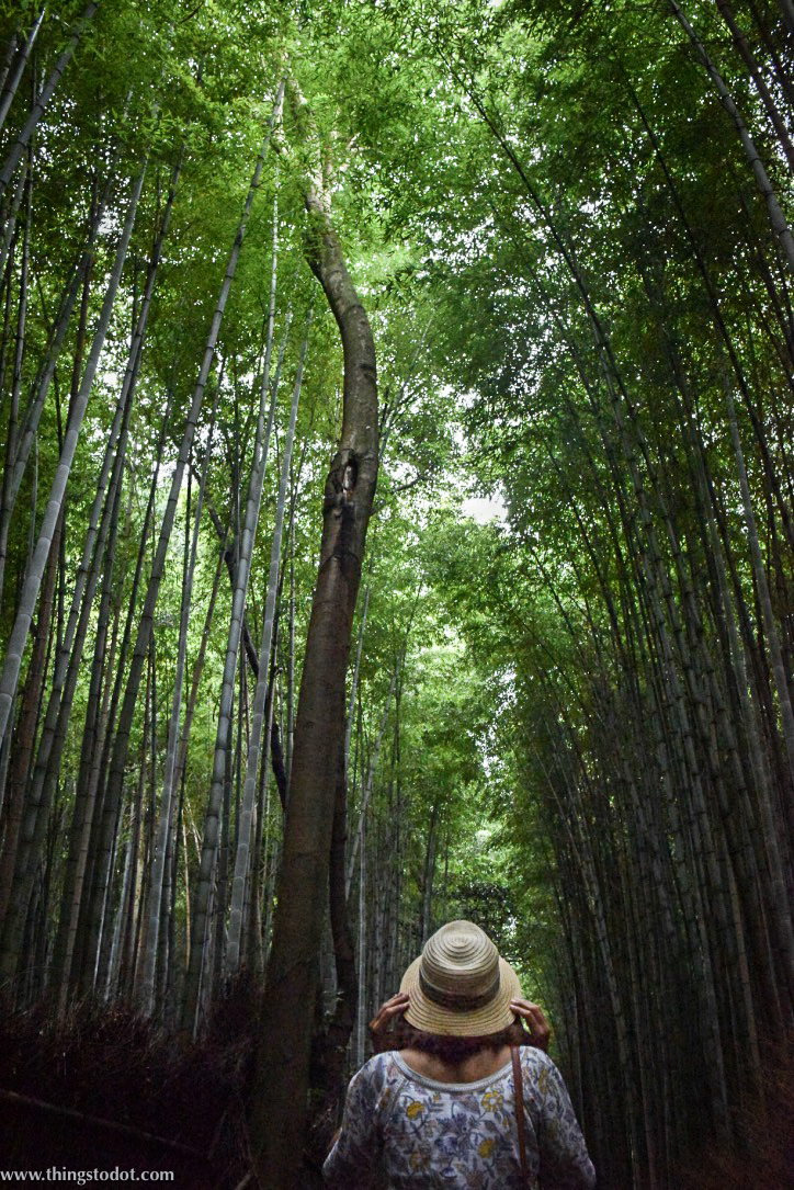 Arashiyama Bamboo Grove, UNESCO World Heritage Site, Kyoto, Japan. Image©www.thingstodot.com
