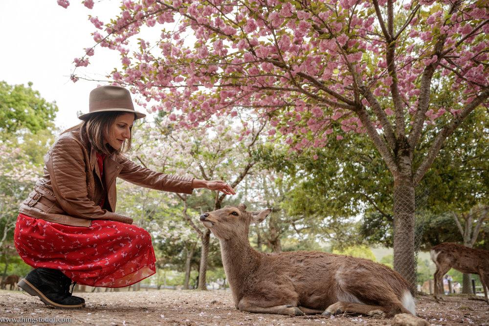 Nara Park, Nara, Japan. Photo: Kosuke Arakawa (www.kosukearakawa.com). Image©www.thingstodot.com.