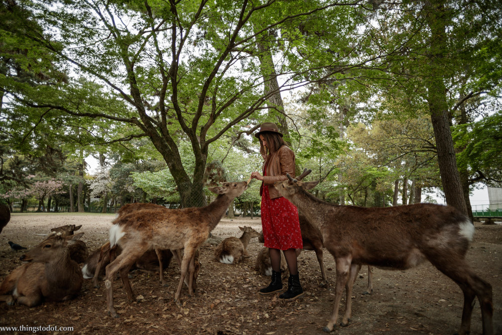 Nara deer park, Nara. Photo: Kosuke Arakawa (www.kosukearakawa.com). Image©www.thingstodot.com.