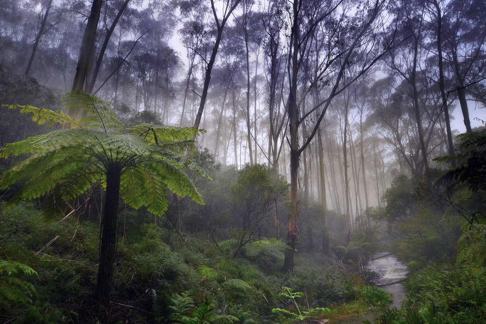 Katoomba Falls lush rainforest, Blue Mountains, NSW, Australia.Photo: Brad Chilby (www.chilby.com.au). Image©Chilby Photography.