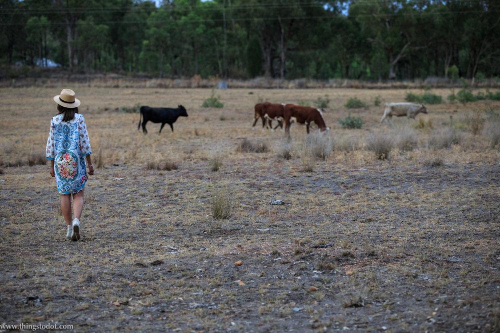Traveling Stock Reserve, Mudgee NSW, Australia. Photo:Noel Dawson, Image©www.thingstodot.com.