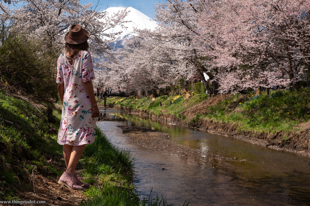 Sakura, cherry blossoms, Japan, Shinnasho River, near Oshino Hakkai. Photo: Yuga Kurita. Image©www.thingstodot.com.