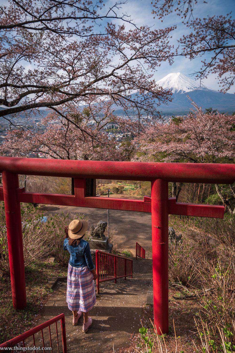 Cherry Blossoms, Sakura, Fuji, Japan.Image©www.thingstodot.com.
