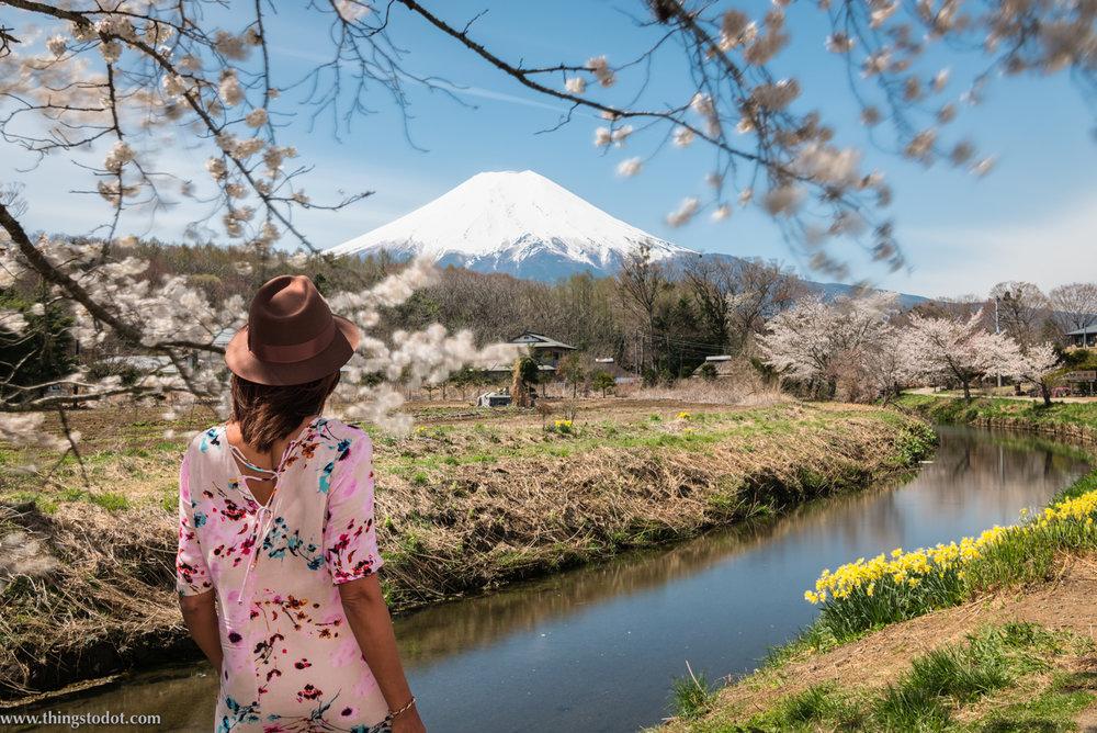 Sakura, cherry blossoms, Mount Fuji,Japan,Shinnasho River, near Oshino Hakkai. Photo: Yuga Kurita. Image©www.thingstodot.com.