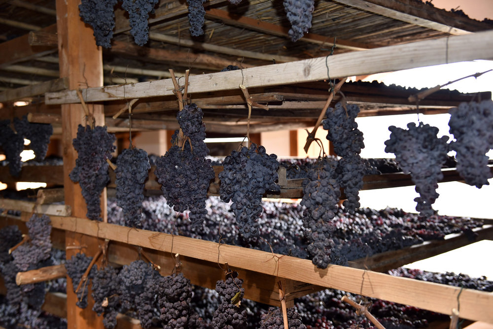 The grapes laid out to dry