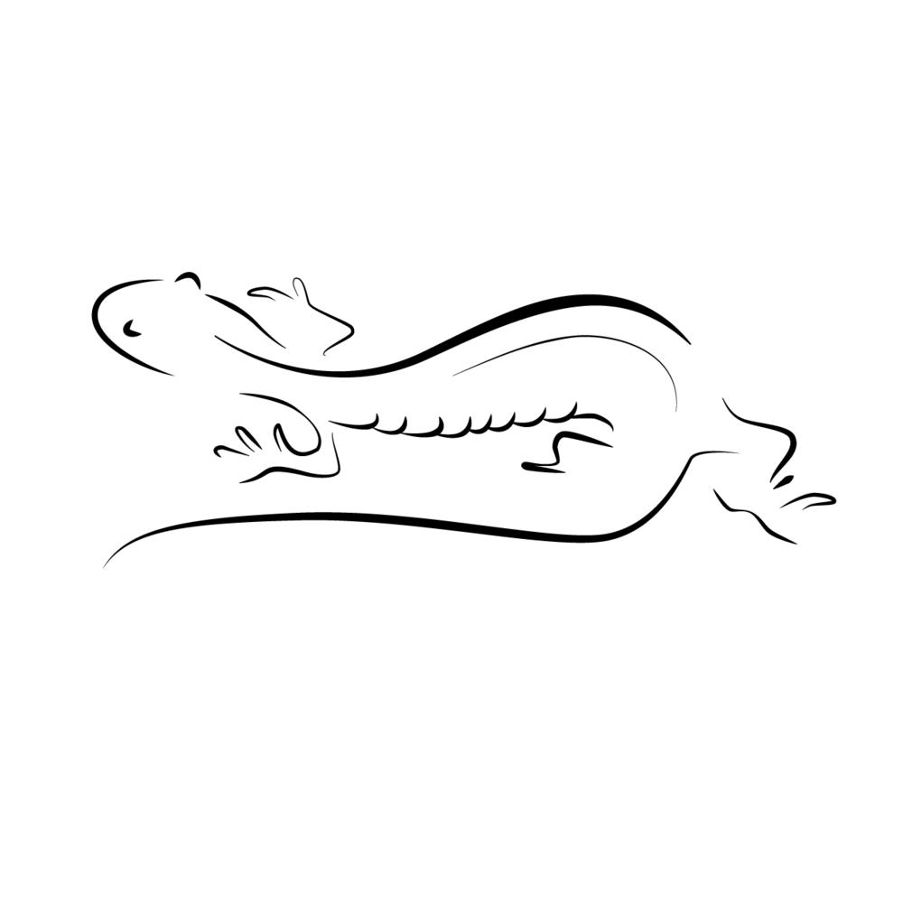 bergeron-salamander-.png