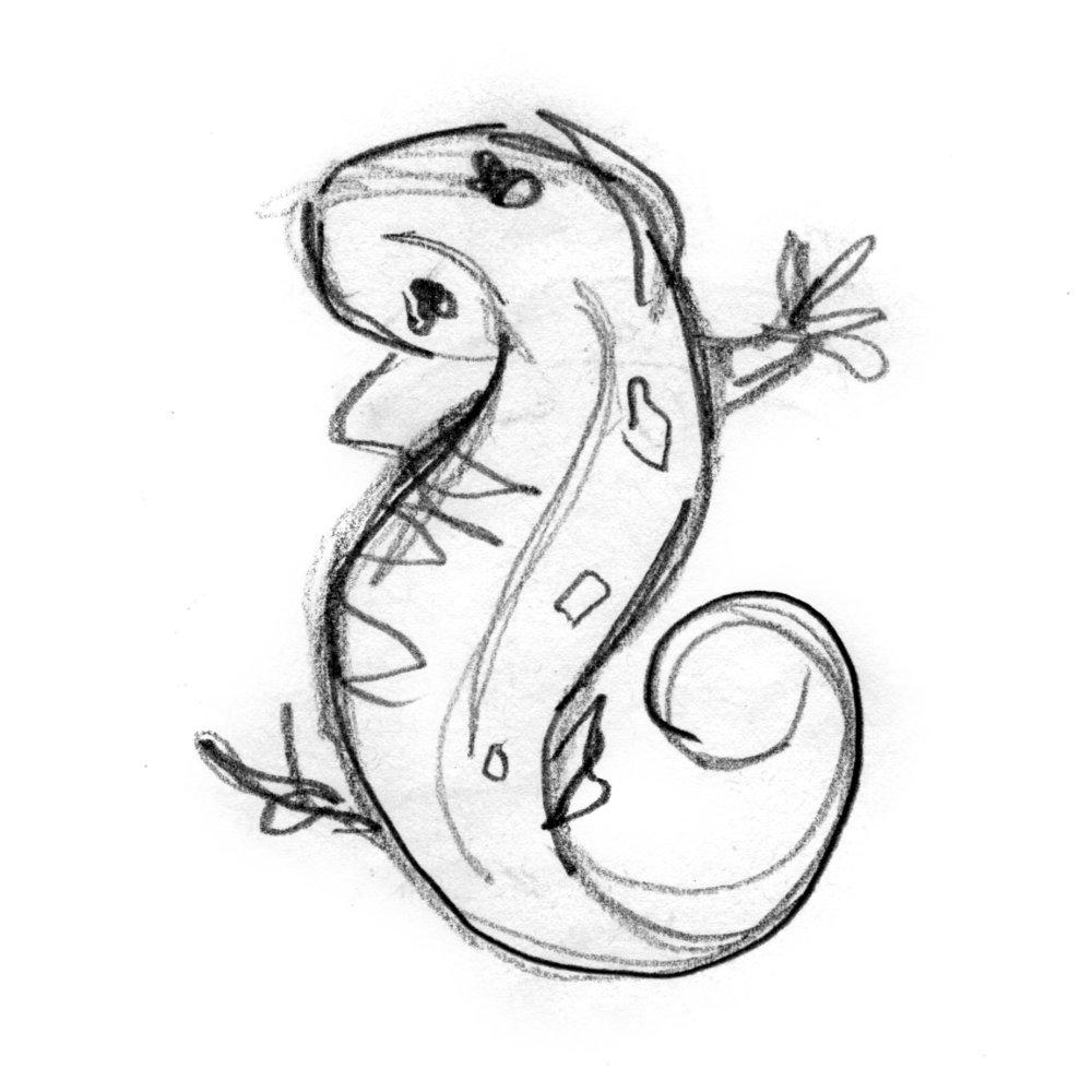 bergeron-salamander-gesture-drawing.jpg