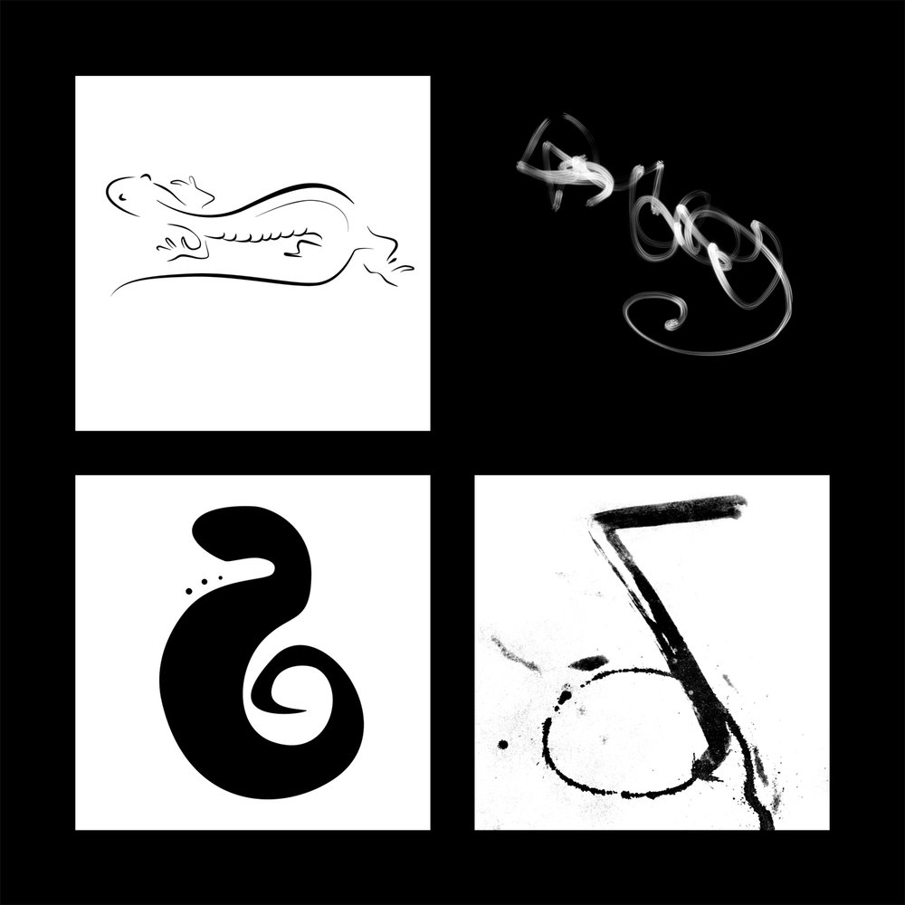 alicia-berberon-salamander-studies-1.jpg