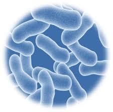 bakterie.jpg