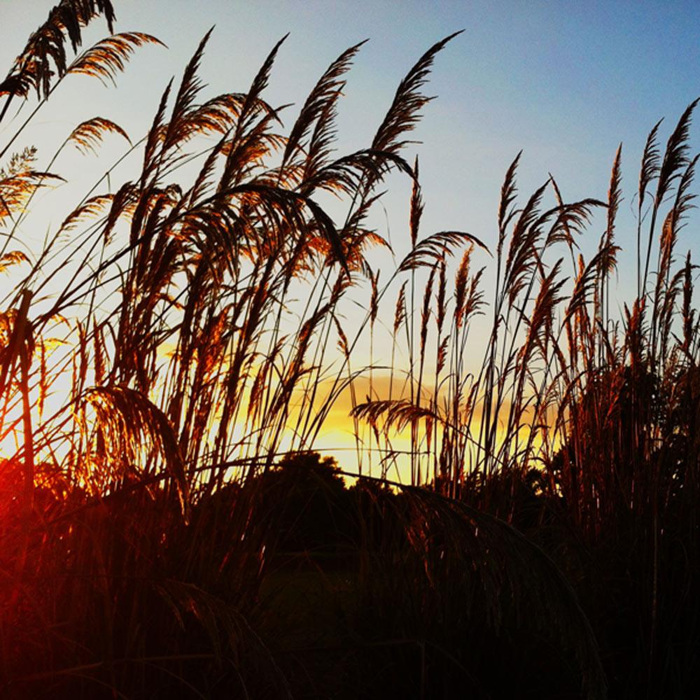 Thankfulness: A pretty sky