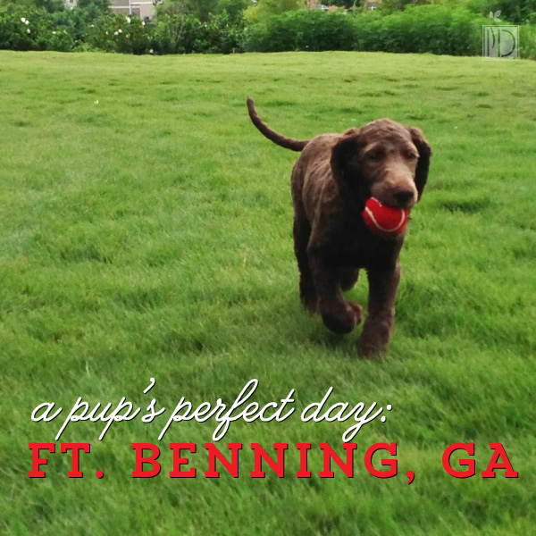 A pup's perfect day: Linx