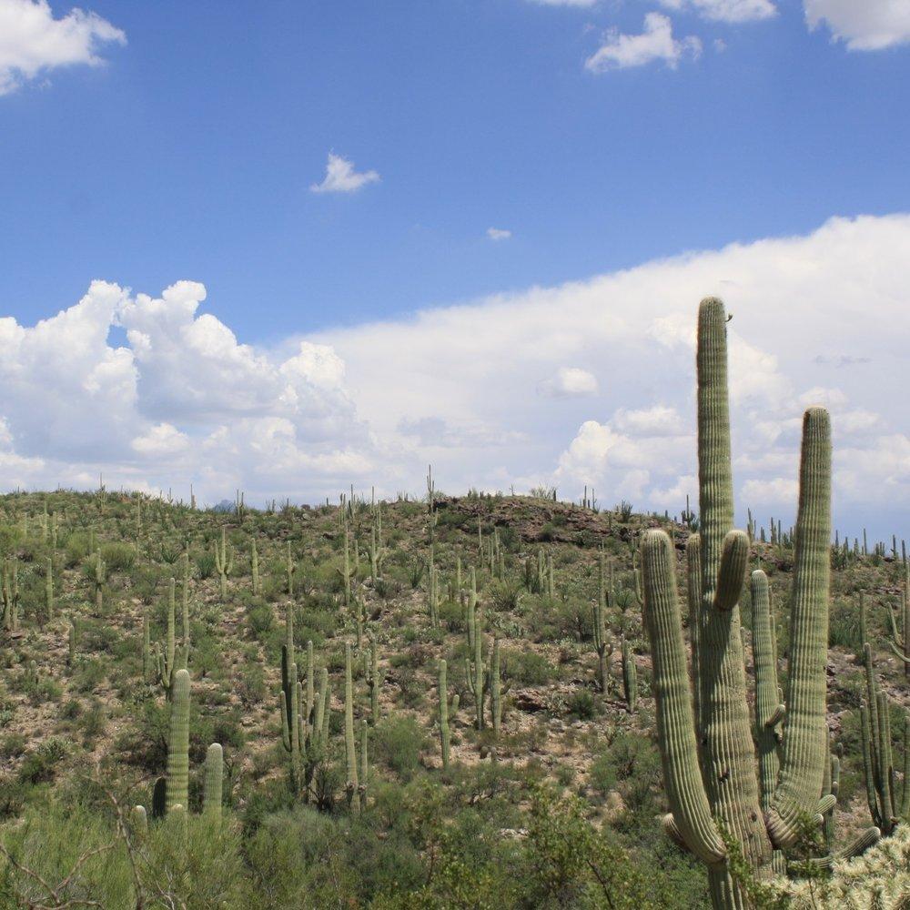 Tucson - Arizona