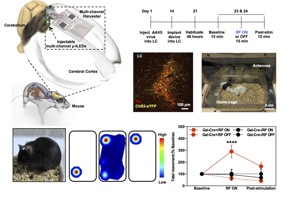 Ultra high frequency powered subcutaneous devices drive arousal behaviors in mice