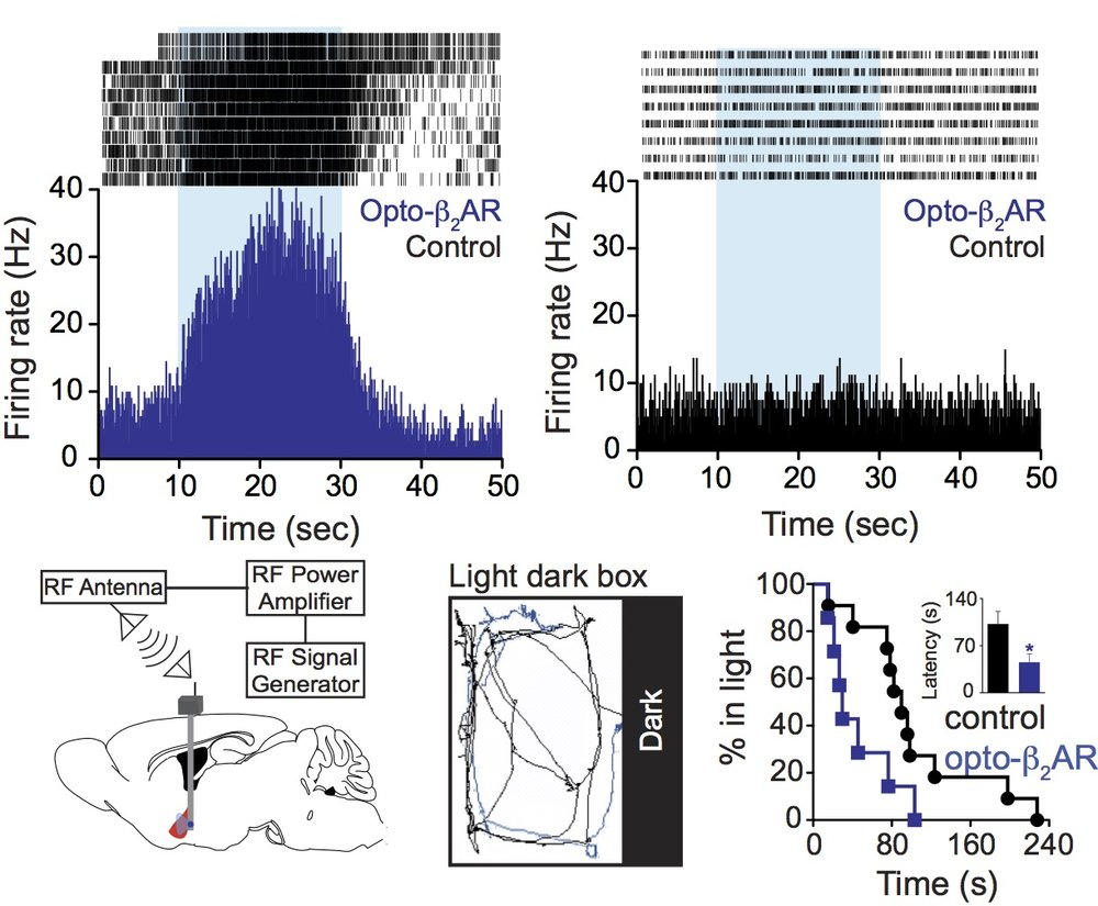 Optogenetic manipulation of beta adrenergic signaling in the basolateral amygdala drives anxiety-like behavior