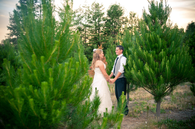 Portrait of bride and groom in christmas tree grove