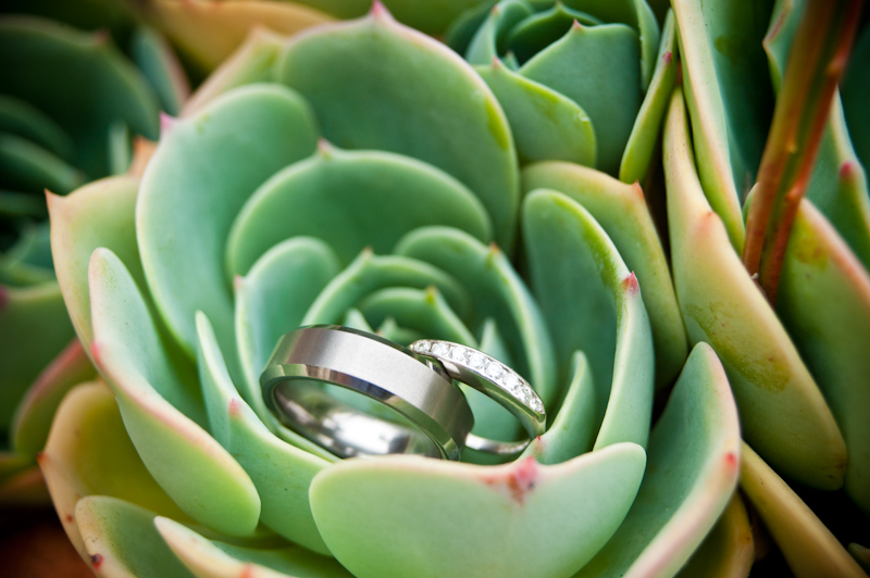 Detail of wedding rings on succulent