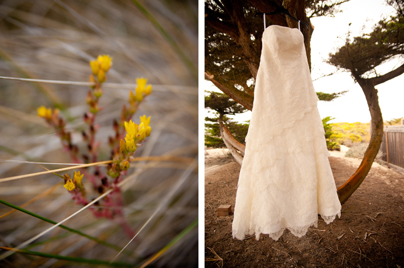 Wedding dress hanging in cypress tree in Monterey, CA