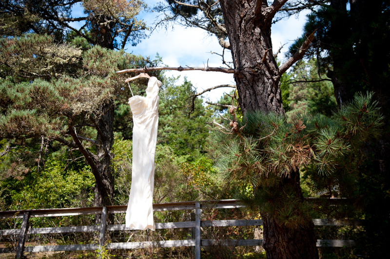 Wedding dress hanging from tree branch in Anchor Bay, CA