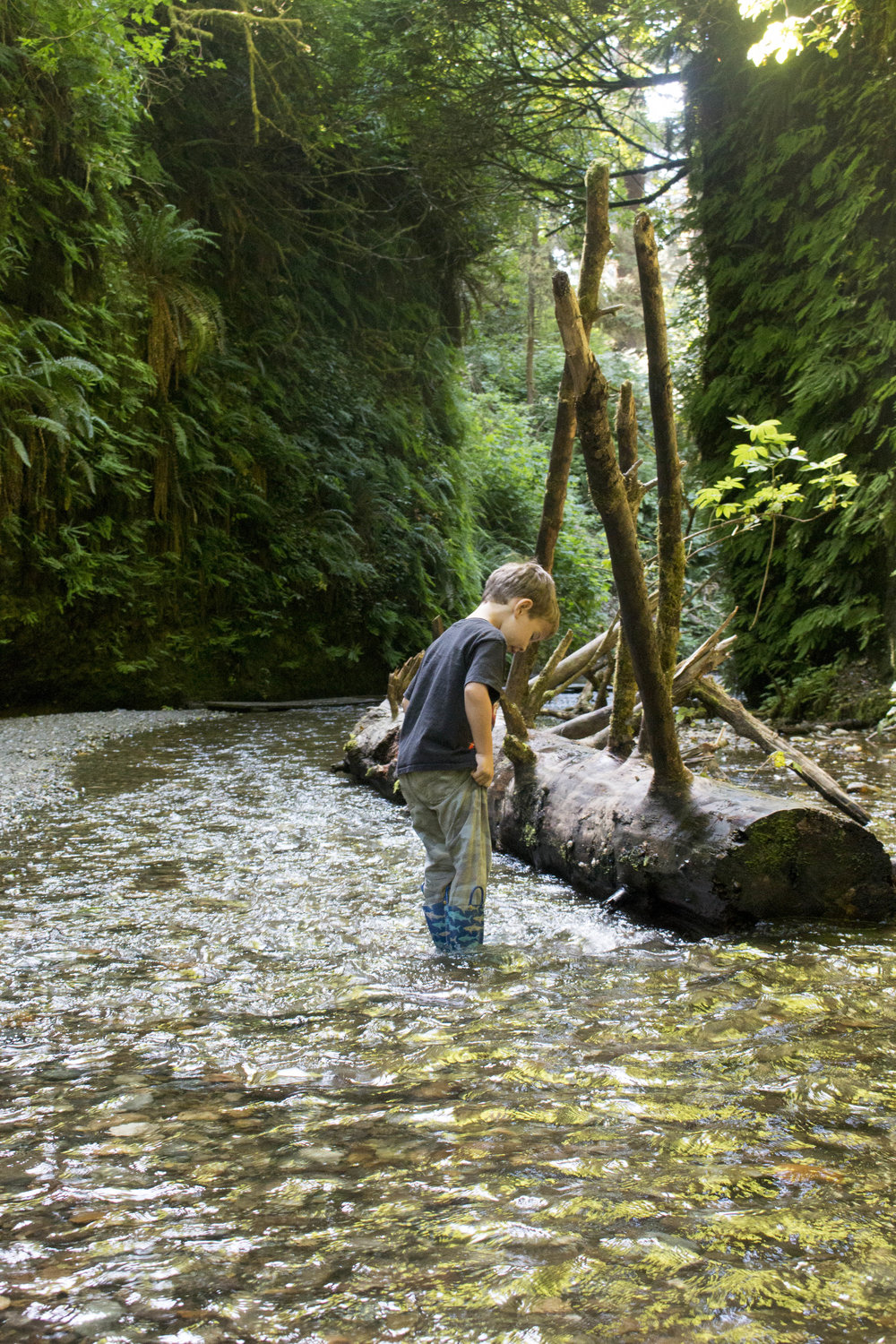 Our son exploring Fern Canyon in Prairie Creek State Park.