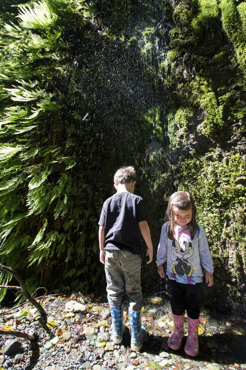 Springs and small waterfalls line the fern covered hillsides, cliffs and gullys of the northern sections of the Redwood Parks.