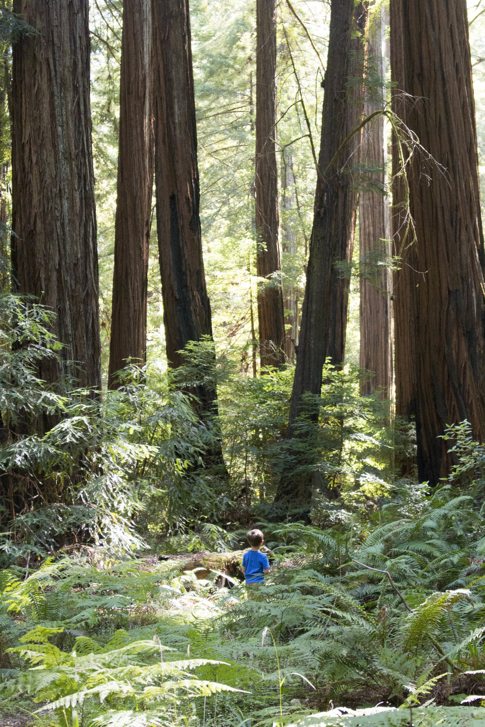 Return of the Jedi, E.T., and the upcoming A Wrinkle In Time were all shot in Northern California's picturesque redwoods.