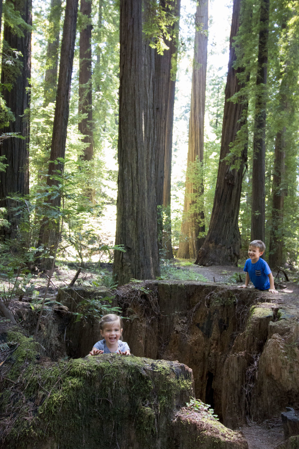 Often what's at your feet is as impressive as what's above your head when in the redwoods.
