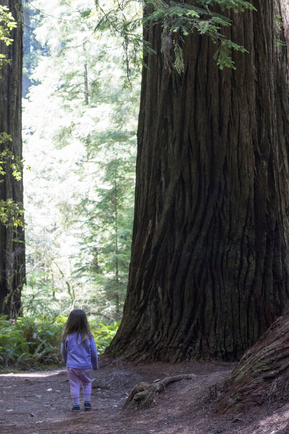 Even a short walk in the redwoods leaves you with lasting memories.