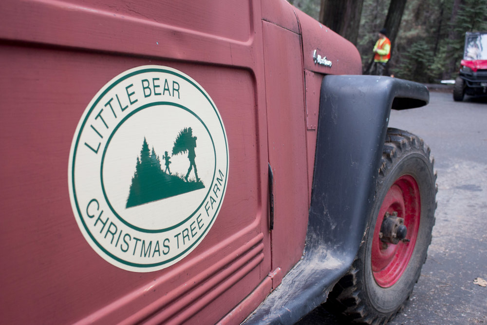 The Little Bear Christmas Tree Farm is in the historic Sierra Foothill town of Alta right off Interestate 80. The farm, which operates more like a small village, is an absolute treat in the winter.