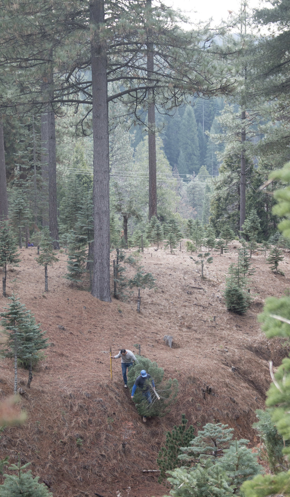 Forget about running with scissors, how about uncovered saws and steep hillsides.